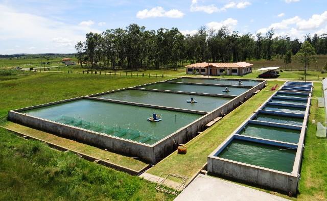 asociaci n rural del paraguay fundarp engranaje On estanques para piscicultura