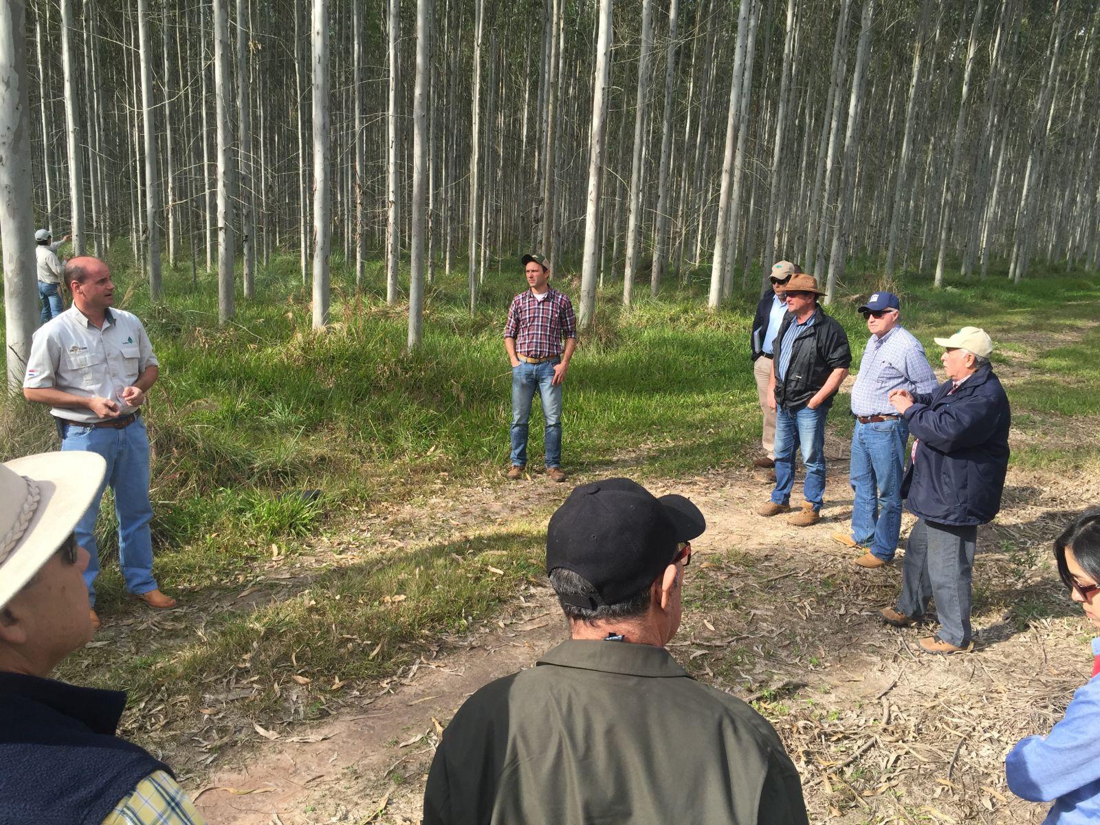 Promueven inversiones forestales en Caazapá