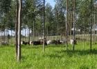Paraguay reúne condiciones óptimas para negocios forestales